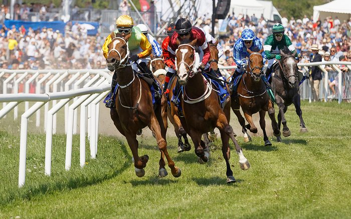 Group of Race Horses
