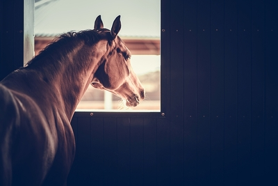 Horse Looks out of Window