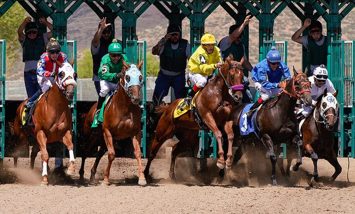 Horses at the Starting Gate