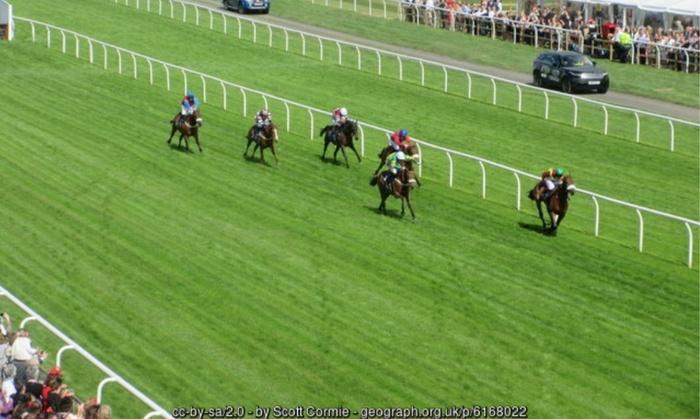 Horses Race for Finish