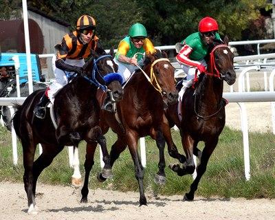 Race Horses Side by Side